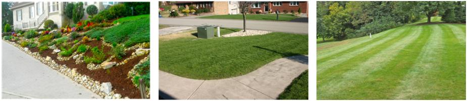 Alan Silverio Lawn Care Customer Photos